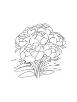 Peony-coloring-pages-15