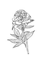 Peony-coloring-pages-16