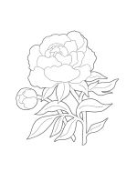 Peony-coloring-pages-18