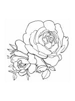 Peony-coloring-pages-19