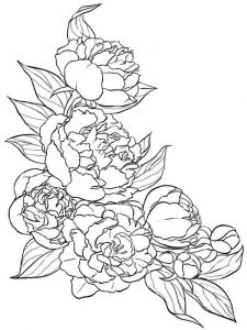 Peony-flower-coloring-pages-1