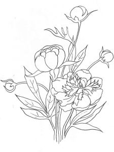Peony-flower-coloring-pages-10