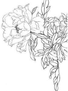 Peony-flower-coloring-pages-3