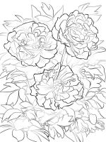 Peony-flower-coloring-pages-5