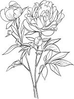 Peony-flower-coloring-pages-6