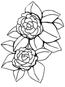 Peony-flower-coloring-pages-9