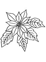 Poinsettia-flower-coloring-pages-8