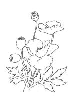 Poppy-flower-coloring-pages-10