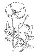Poppy-flower-coloring-pages-14
