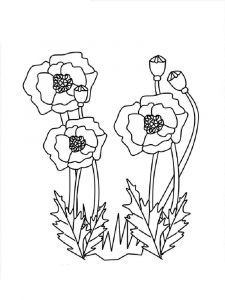 Poppy-flower-coloring-pages-15