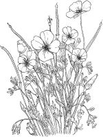 Poppy-flower-coloring-pages-9