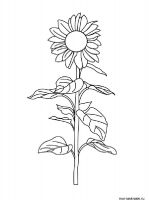 Sunflower-flower-coloring-pages-20