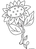 Sunflower-flower-coloring-pages-24