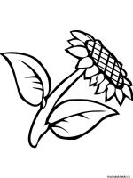Sunflower-flower-coloring-pages-25