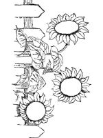 Sunflower-flower-coloring-pages-26