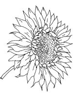 Sunflower-flower-coloring-pages-27