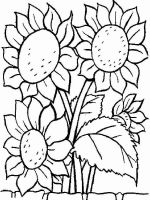Sunflower-flower-coloring-pages-30