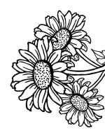 Sunflower-flower-coloring-pages-32