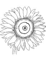 Sunflower-flower-coloring-pages-35