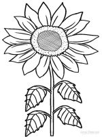 Sunflower-flower-coloring-pages-36