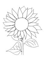 Sunflower-flower-coloring-pages-37