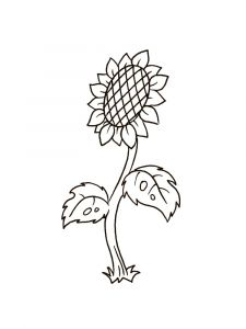Sunflower-flower-coloring-pages-7
