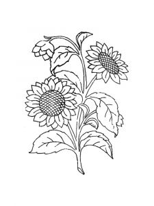 Sunflower-flower-coloring-pages-9