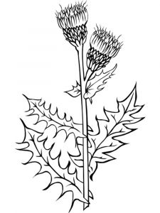 Thistle-flower-coloring-pages-10