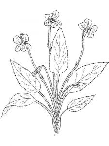 Violet-flower-coloring-pages-10