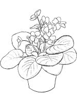 Violet-flower-coloring-pages-11