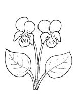 Violet-flower-coloring-pages-4