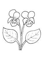 Violet-flower-coloring-pages-4