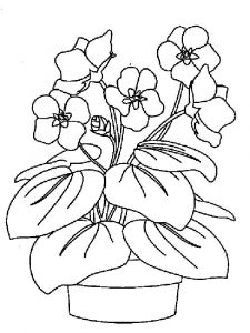 Violet-flower-coloring-pages-5