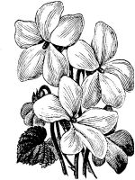 Violet-flower-coloring-pages-7