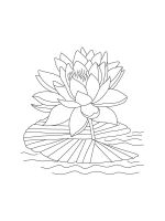 Water-lily-coloring-pages-15