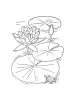 Water-lily-coloring-pages-21