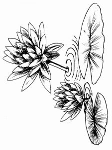Water-lily-flower-coloring-pages-7