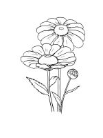 chamomile-coloring-pages-20
