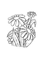 chamomile-coloring-pages-21
