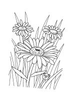 chamomile-coloring-pages-25