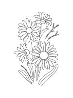 chamomile-coloring-pages-32