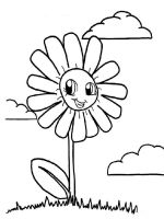 chamomile-flower-coloring-pages-16