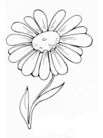 chamomile-flower-coloring-pages-4