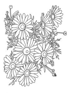 chamomile-flower-coloring-pages-5