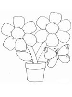 chamomile-flower-coloring-pages-7