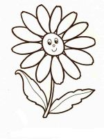 chamomile-flower-coloring-pages-8