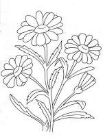 chamomile-flower-coloring-pages-9