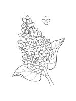 lilac-coloring-pages-15