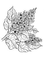 lilac-flower-coloring-pages-1