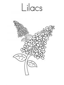 lilac-flower-coloring-pages-6